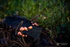 grzyby roztocza