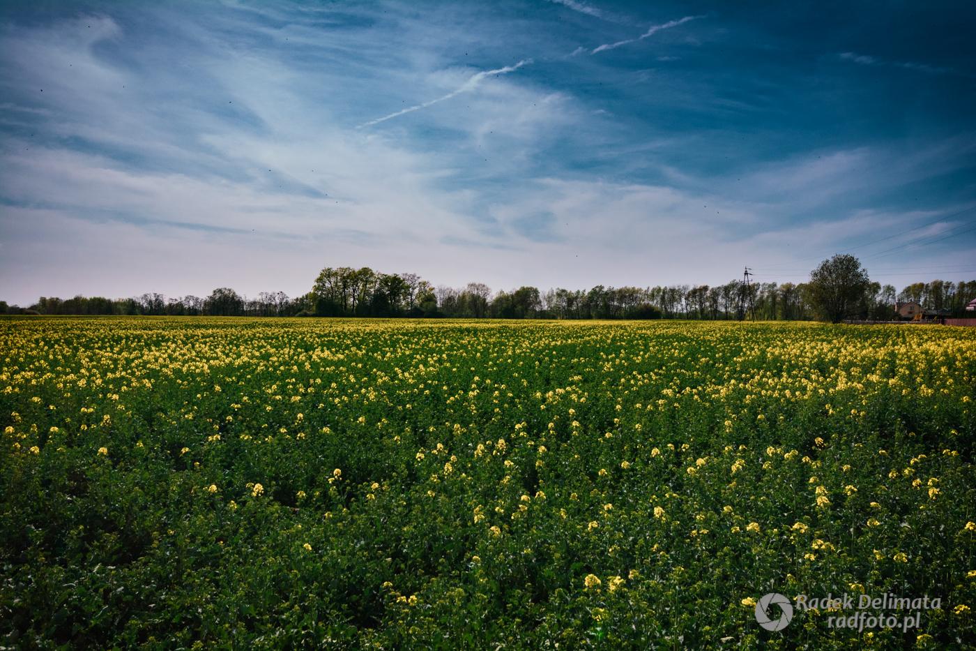 wiosna_dzików
