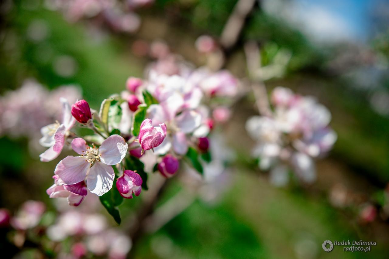 Wiosna w czasach zarazy
