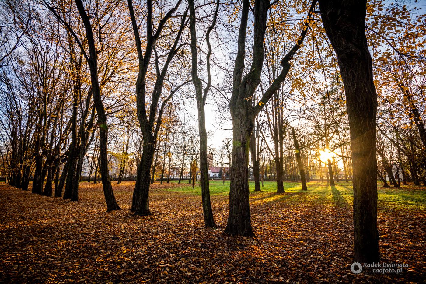 jesień w parku dzikowskim w tarnobrzegu
